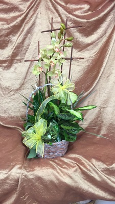 Green plants and Silk Orchids from Aletha's Florist in Marietta, OH