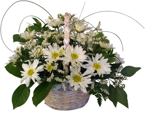 White Daisy Delight from Aletha's Florist in Marietta, OH